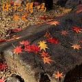 梁凡最新专辑《你记得吗》封面图片